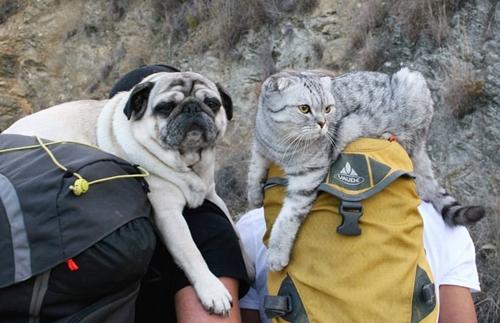 Dogilike.com :: 2 หนุ่มคู่รักพาหมาปั๊กและแมวคู่ใจไต่เขา ผจญภัยไกลกว่า 1,000 กิโลเมตร
