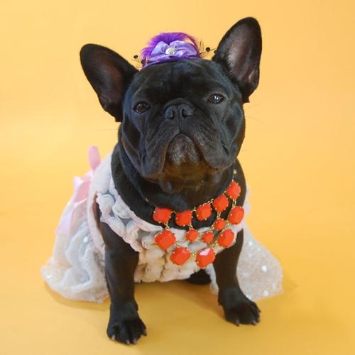 Dogilike.com :: เจ๋ง! หญิงเจ้าของออกแบบชุดให้เจ้าตูบสุดรักกับแฟชั่นย้อนยุคที่ไม่ซ้ำใคร