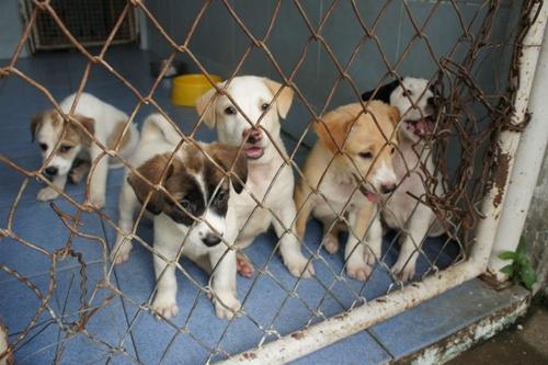 Dogilike.com :: รวมเด็ดร้านอาหาร ที่พัก ที่เที่ยวพาน้องหมาเข้าได้ จ.นครปฐม ชั่วโมงนี้ต้องไปโดน !!