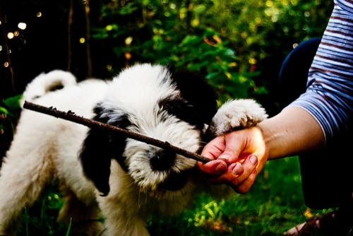 Dogilike.com :: 5 คาถาจำให้ขึ้นใจ ท่องไว้น้องหมาไม่มีดื้อ !!