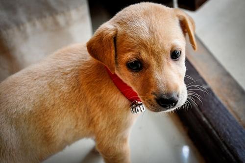 Dogilike.com :: 4 ทริคสำหรับคนโสด เลี้ยงหมายังไงให้ได้แฟน !!