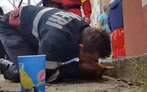 Dogilike.com :: หนึ่งชีวิตก็สำคัญ! คลิปวินาทีนักดับเพลิงทำ CPR ช่วยชีวิตสุนัขสำลักควันไฟ