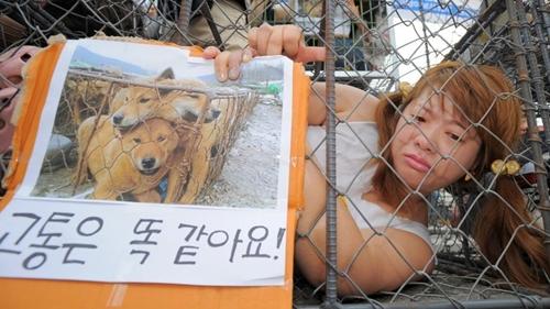 Dogilike.com :: ถึงเวลาเอาจริง! เกาหลีใต้สั่งปิดตลาดค้าเนื้อหมาใหญ่ที่สุดในประเทศ