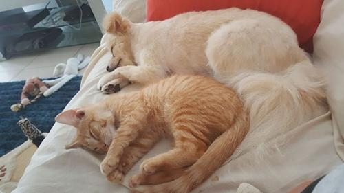 Dogilike.com :: เมื่อความผูกพันของหมากับแมว ทำให้หญิงสาวหายจากอาการวิตกกังวล !!
