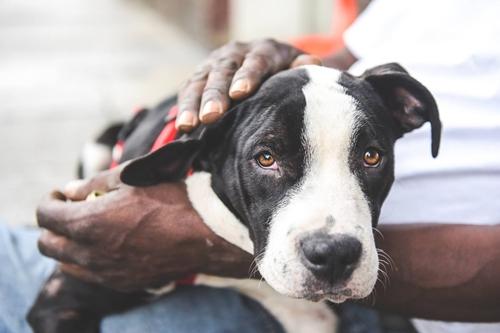 Dogilike.com :: เรื่องราวของอดีตชายไรบ้านที่เติมเต็มรักให้ตูบจรจัดข้างถนน !!