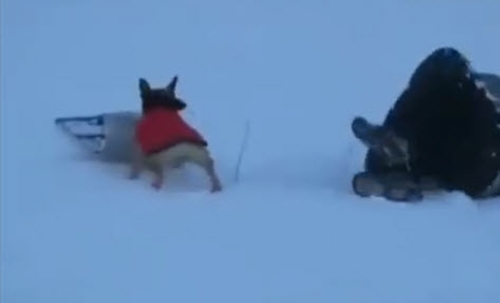 Dogilike.com :: อดใจไม่ไหว! คลิปตูบสุดแสบแย่งเจ้าของเล่นเลื่อนหิมะ สไลด์ลงอย่างเซียน