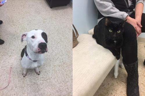 Dogilike.com :: จนท.บุกช่วยเหลือสุนัขและแมว หลังพบอยู่ในอพาร์ทเม้นท์สกปรก