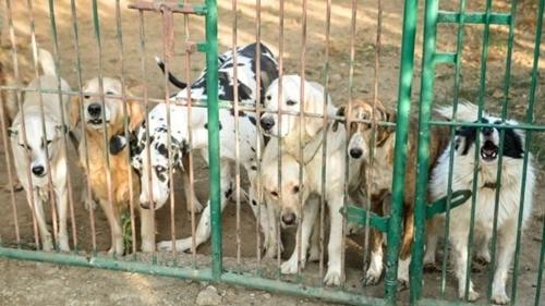 Dogilike.com :: เรื่องราวของหนุ่มวิศวกรซอฟแวร์ ผู้เป็นที่พึ่งสุนัขท้ายของสุนัขจรจัด 735 ตัว !!