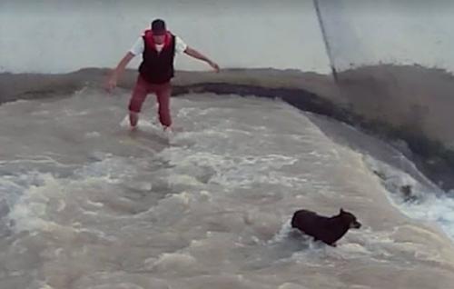 Dogilike.com :: แชร์สนั่น!! คลิปซึ้งเมื่อทุกคนพร้อมใจจับมือช่วยชีวิตสุนัขตกคลอง