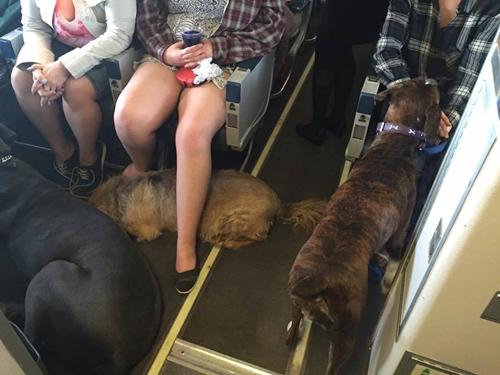 Dogilike.com :: รวม 10 ข่าวน้องหมาสุดฮอตประจำปี 2016