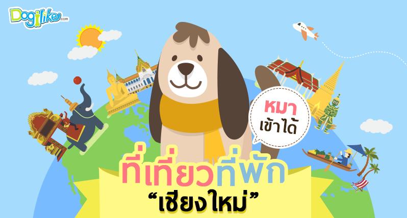 Dogilike.com :: สูดไอดินฟินไอหมอกกับร้านอาหาร ที่พัก ที่เที่ยวพาน้องหมาเข้าได้ จ.เชียงใหม่ !!