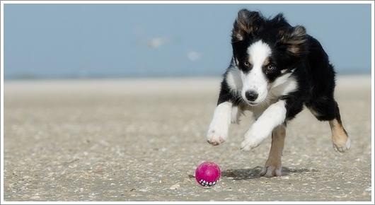 Dogilike.com :: จะเป็นอะไรมั้ย? ถ้าให้ลูกสุนัขออกกำลังกายหนัก ๆ ตั้งแต่ยังเล็ก