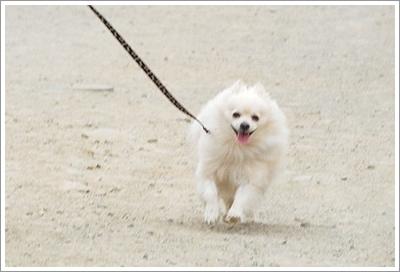 Dogilike.com :: เช็กลิสต์! 6 พฤติกรรมของผู้เลี้ยงที่ดูเหมือนจะรักน้องหมา ...