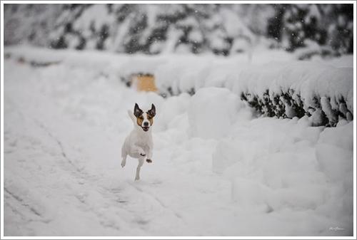 Dogilike.com :: ภาพถ่ายสุดฟิน! เมื่อเจ้าของพาเจ้าตูบตะลุยเล่นหิมะ