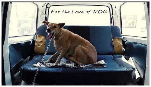Dogilike.com :: ปลื้ม! หนุ่มเก็บเงิน 10 ปี ซื้อรถพยาบาลช่วยหมาจรจัดไม่มีใครเหลียวแล