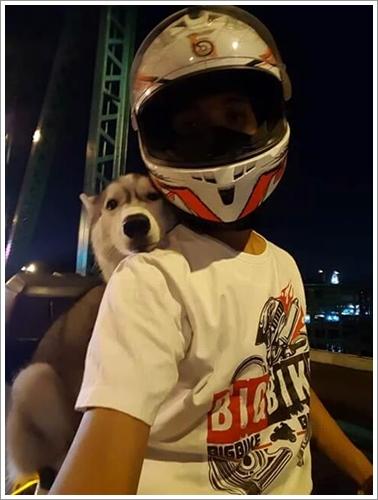 Dogilike.com :: สด๊อยวิกกี้ ไซบี้สายซ้อน ! น้องหมาติดเบาะตามติดเจ้าของไปทุกที่