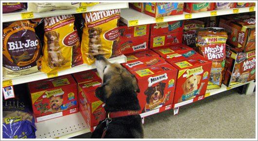 Dogilike.com :: รู้มั้ย? 23 ก.พ. เป็นวันขนมสุนัข (National Dog Biscuit Day)