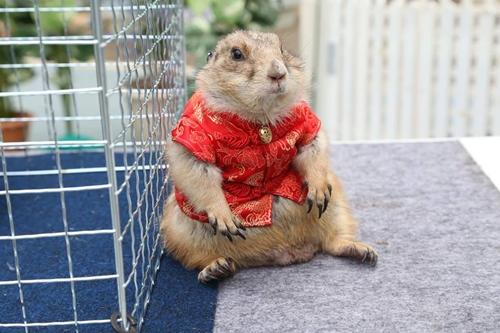 Dogilike.com ::  คณะสัตวแพทย์ฯ มหิดล เตรียมจัดงานใหญ่ มหิดลคนรักสัตว์ ครั้งที่ 12