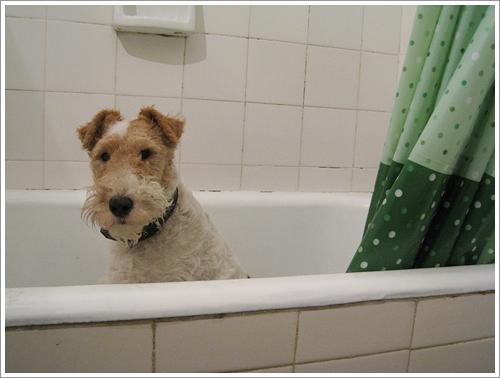Dogilike.com :: ร้อน ๆ แบบนี้อาบน้ำให้สุนัขบ่อย ๆ ช่วยคลายร้อนได้จริงเหรอ?