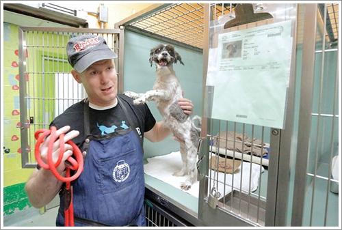 Dogilike.com :: ปลื้ม! หนุ่มใจดีตระเวนตัดขนฟรีให้ตูบในศูนย์พักพิงฯ หวังช่วยหาบ้านใหม่
