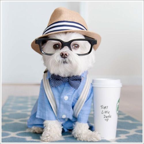 Dogilike.com :: น่ารัก! เจ้า Toby น้องหมาฮิปสเตอร์สุดป๊อบที่มีผู้ติดตามนับแสนคน