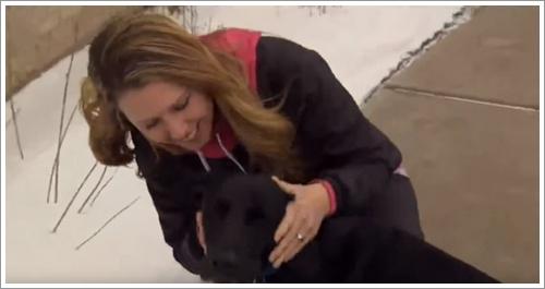 Dogilike.com :: ฮีโร! ตูบแสนรู้เห่าบอกตำรวจให้ช่วยชีวิตเจ้าของโรคหัวใจกำเริบ (มีคลิป)