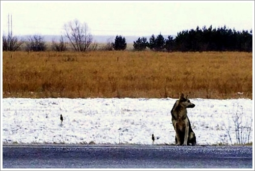 Dogilike.com ::  สุดเศร้า! สุนัขซื่อสัตย์นั่งเฝ้าจุดที่เจ้าของเสียชีวิตนาน 2 ปี รอวันเจ้าของกลับมา