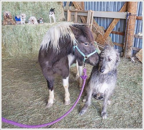 Dogilike.com :: รักไม่มีขีดจำกัด! หนุ่มมะกันรับเลี้ยงสุนัขสูงวัยที่ไม่มีใครต้องการนับ 10 ตัว