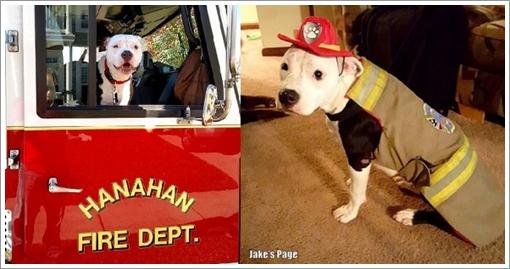 Dogilike.com :: สุดซึ้ง! จนท.ดับเพลิงรับเลี้ยงลูกสุนัขถูกไฟไหม้ ก่อนฝึกเป็นสุนัขหน่วยดับเพลิง