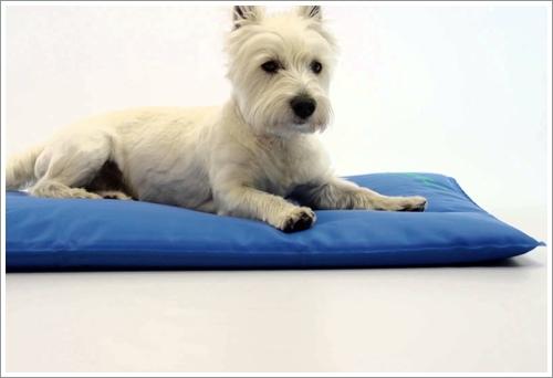 Dogilike.com :: 7 สุดยอดเทคนิคดูแลสุนัขขนยาวในช่วงอากาศร้อนสุด ๆ