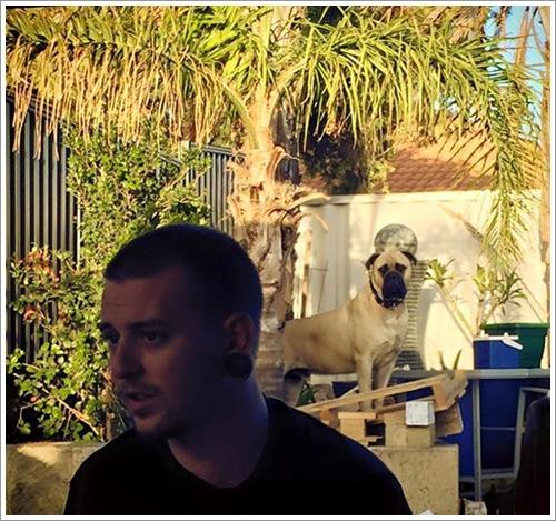 Dogilike.com :: ภาพชวนขนลุก! เจ้าของเผยภาพบูลมาสทิฟฟ์ผู้ชอบแอบมองอยู่ห่าง ๆ