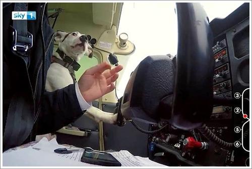 Dogilike.com :: เท่สุดๆ! Shadow เจ้าตูบตัวแรกที่ได้ทำหน้าที่ผู้ช่วยนักบิน