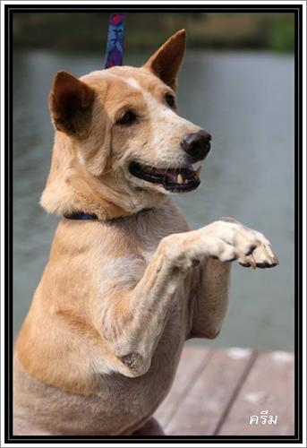 Dogilike.com :: โครงการบ้านรักหมาศาลายา รับบริจาคอาหารและผู้รับอุปการะสุนัขและแมว