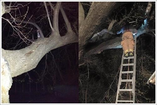 Dogilike.com :: พลังล้นเหลือ! เกรทเดนสุดซนติดอยู่บนต้นไม้ จนท.นับ 10 ต้องเร่งช่วย (มีคลิป)