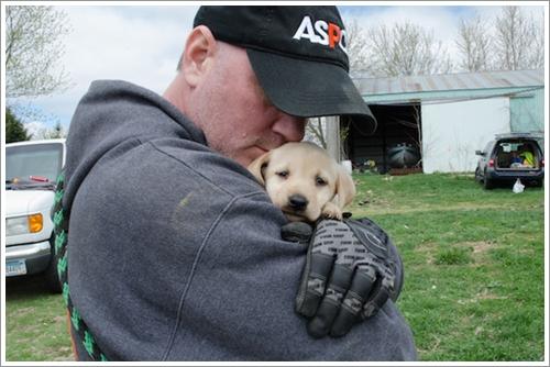 Dogilike.com :: จนท.บุกช่วยสุนัขลาบราดอร์ 48 ตัว จากโรงงานผลิตลูกสุนัขในสหรัฐฯ !!
