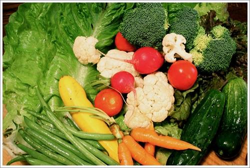 Dogilike.com :: ให้น้องหมากินผัก ผลไม้ ล้างอย่างไรปลอดภัยสารพิษ !