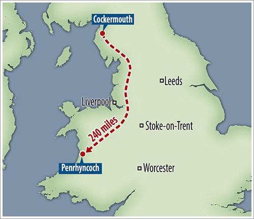 Dogilike.com :: คิดถึงจนทนไม่ไหว! เจ้าตูบเดินทางกว่า 240 ไมล์เพื่อกลับไปหาเจ้าของคนเก่า