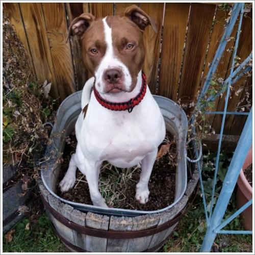 Dogilike.com :: รวมภาพสุดฮา! เมื่อเจ้าหมาตัวแสบเห็นกระถางต้นไม้เป็นที่นอน