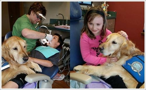Dogilike.com :: JoJo ตูบบำบัดขวัญใจเด็ก ๆ ทำหน้าที่อยู่เป็นเพื่อนช่วยลดเครียด เลิกกลัวหมอฟัน!