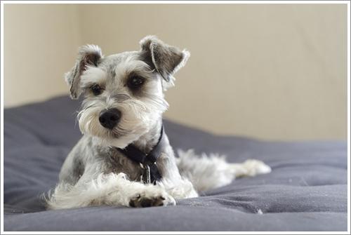 Dogilike.com :: เทคนิคง่าย ๆ ขจัดคราบและกลิ่นฉี่น้องหมาภายในบ้าน