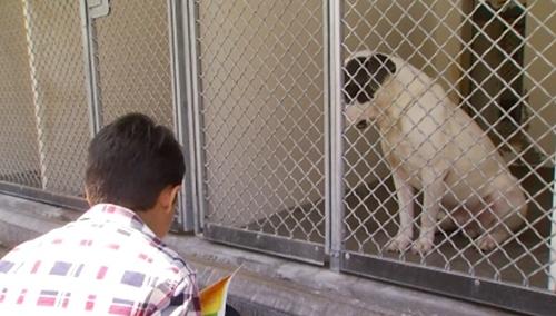 Dogilike.com :: เรื่องราวสุดซึ้ง! เด็กชายออทิสติกอ่านหนังสือให้สุนัขในศูนย์พักพิงฟังนานกว่า 1 ปี (มีคลิป)