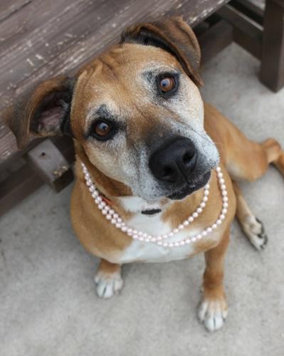 Dogilike.com :: 7 ปีที่รอคอย! เมื่อหญิงใจดีรับเลี้ยงสุนัขสูงวัยจากศูนย์พักพิงสัตว์