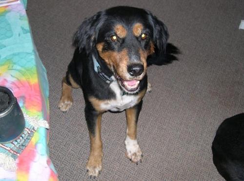 Dogilike.com :: หนุ่มฮีโรกระโดดลงน้ำ ช่วยชีวิตสุนัขสูงวัยรอดตายหวุดหวิด !