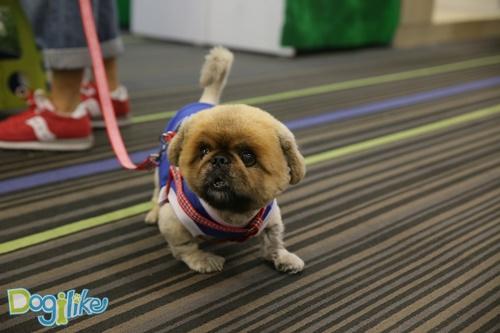 Dogilike.com ::  Dogilike พาเที่ยวพาทัวร์ PET EXPO 2016 ตอนที่ 2 (มีรูปน้องหมาน่ารักเพียบ!!!)