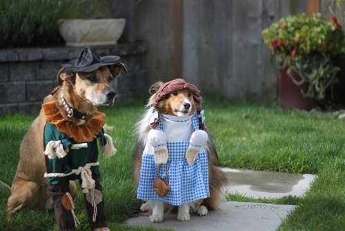 Dogilike.com :: รักต้องรู้! เลี้ยงน้องหมาเหมือนลูกอย่างไร ไม่ให้เกินพอดี