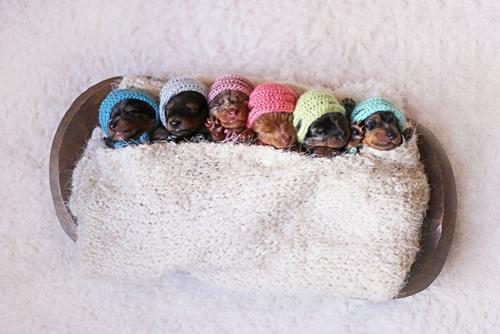 Dogilike.com :: น่ารักสุดๆ ! โฟโต้ชู้ตมุ้งมิ้งของแม่ดัชชุนกับลูกๆ ทั้ง 6 ตัว