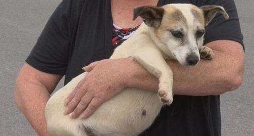 Dogilike.com :: ชีวิตใหม่! กลุ่มรักสัตว์ช่วยสุนัขจรจัดท้องแก่ไม่ให้ถูกการุณยฆาต