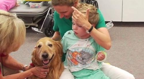 Dogilike.com :: เรื่องราวซึ้งๆ! เมื่อตูบบำบัดเปลี่ยนชีวิตเด็กชายถูกรถชนสาหัสให้สดใสอีกครั้ง (มีคลิป)