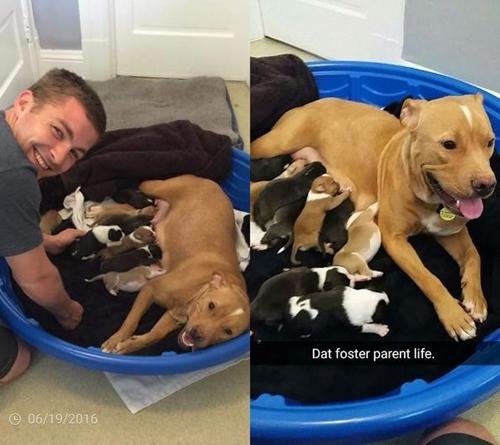 Dogilike.com :: คนใจดำทิ้งแม่สุนัขพิทบูลฯ และลูก 10 ตัวหน้าศูนย์ช่วยเหลือสัตว์ !