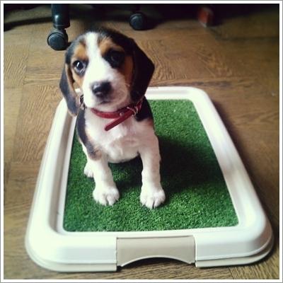 Dogilike.com :: 5 วิธีง่าย ๆ ลับสมองน้องหมาให้ฉลาดเป็นกรด